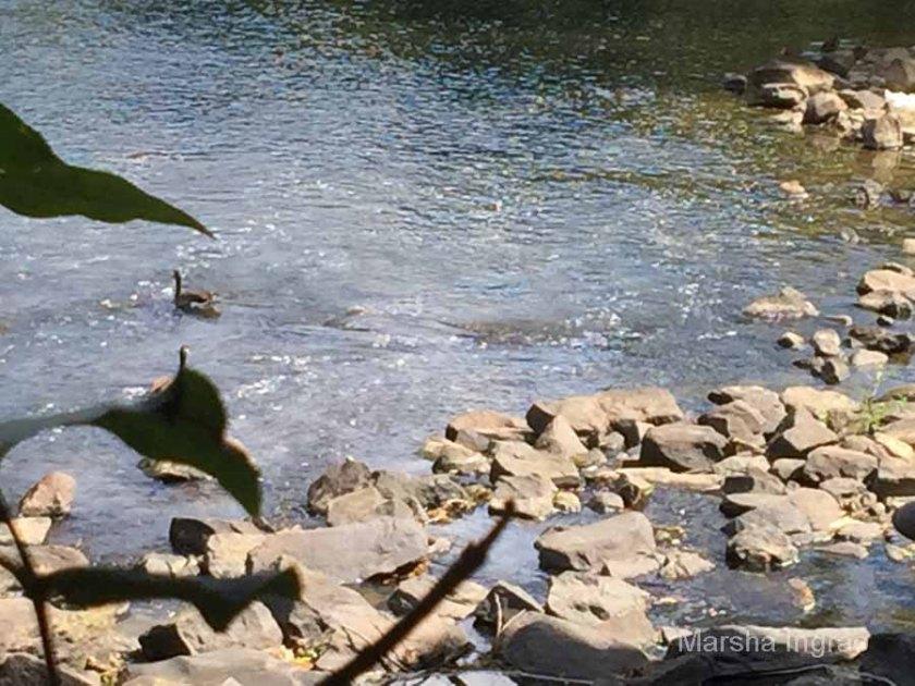 brandywine-river_brecks-mill113