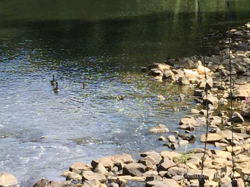 brandywine-river_brecks-mill115