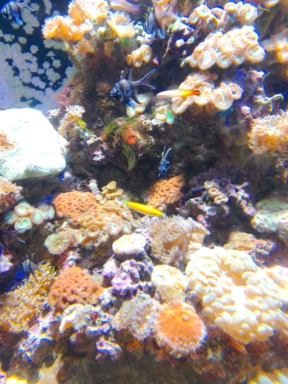 aquarium-singpaore