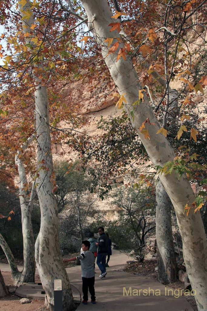 Visitors from China and Porterville, CA shared the path with us on Thanksgiving morning.