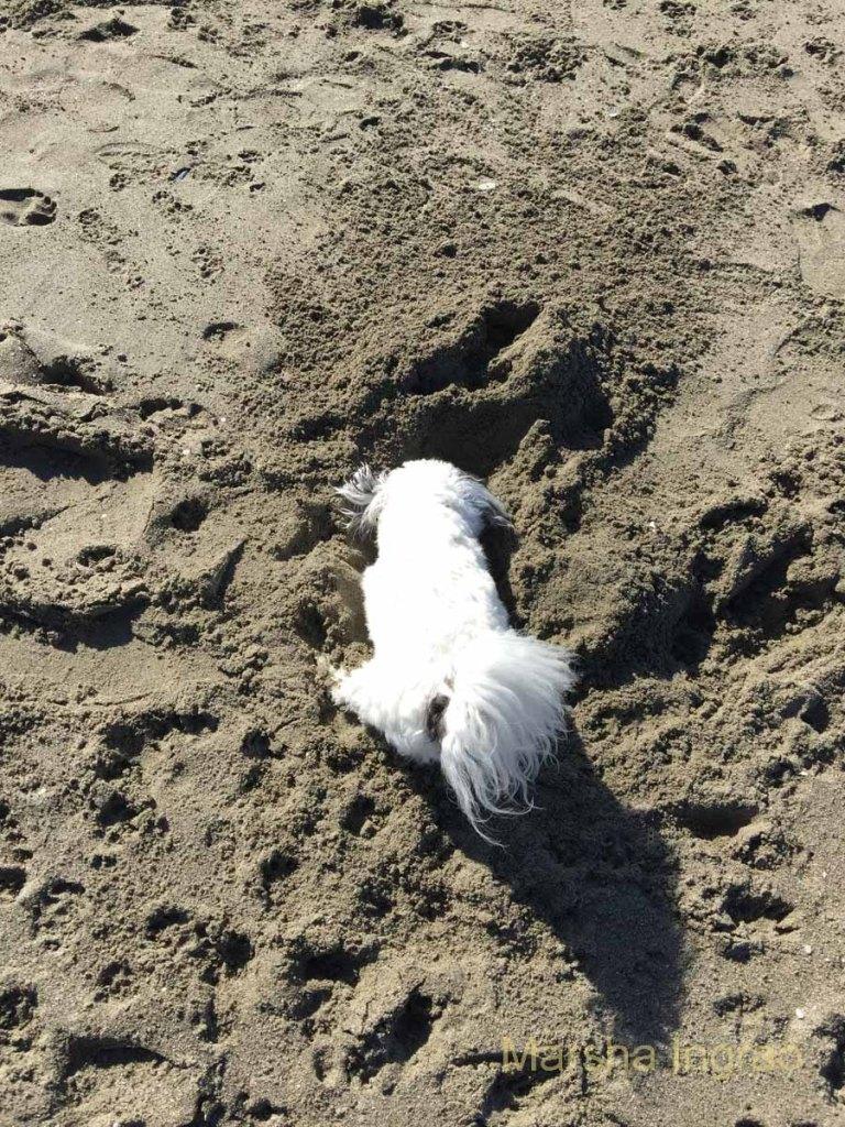 Avial Beach beckoned