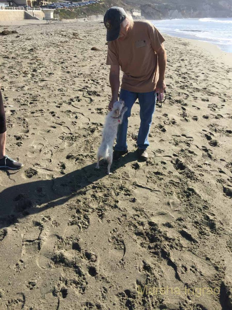 head-in-sand101