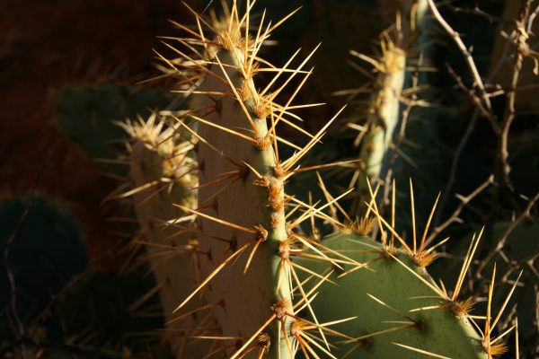 close up of cacti near Sedona