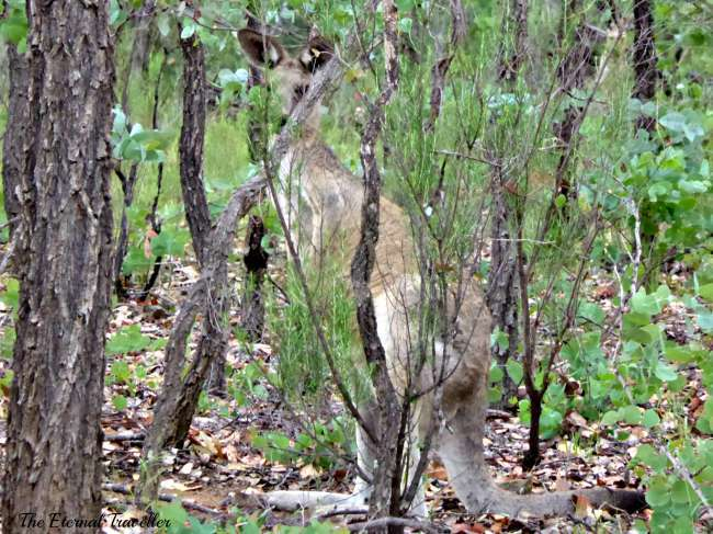 Bush Chorus Australia