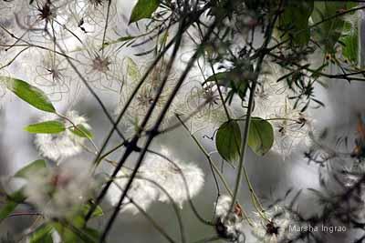 Healesville flowers