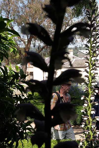 garden turkey