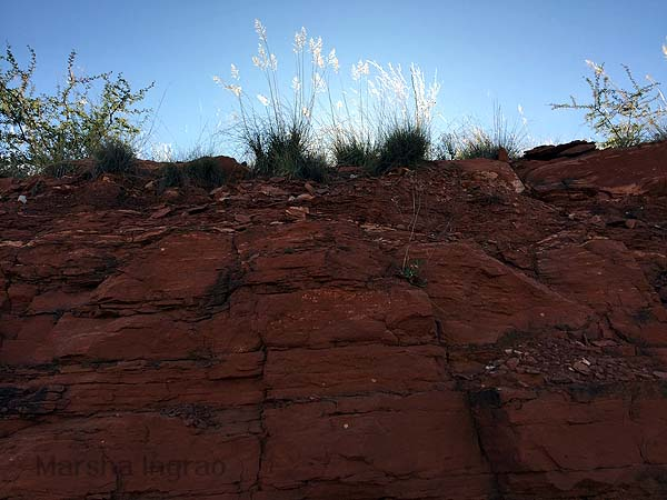 Sedona 10,000 steps