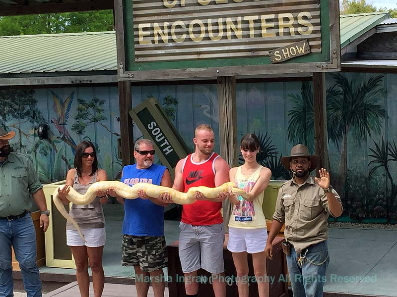 Gatorland The presenter laid a boa constrictor on their outstretched arms
