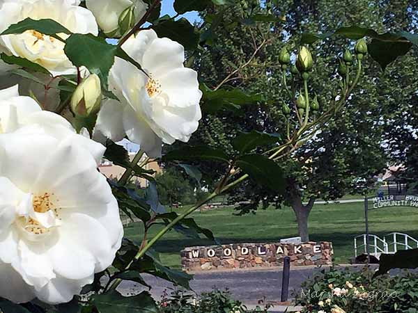 Ten Things to Do During Rose Season in Woodlake, California