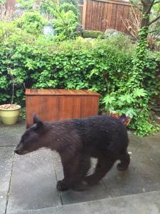 Bear on Lisa's porch