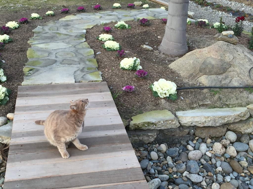 tabby cat on a wooden path