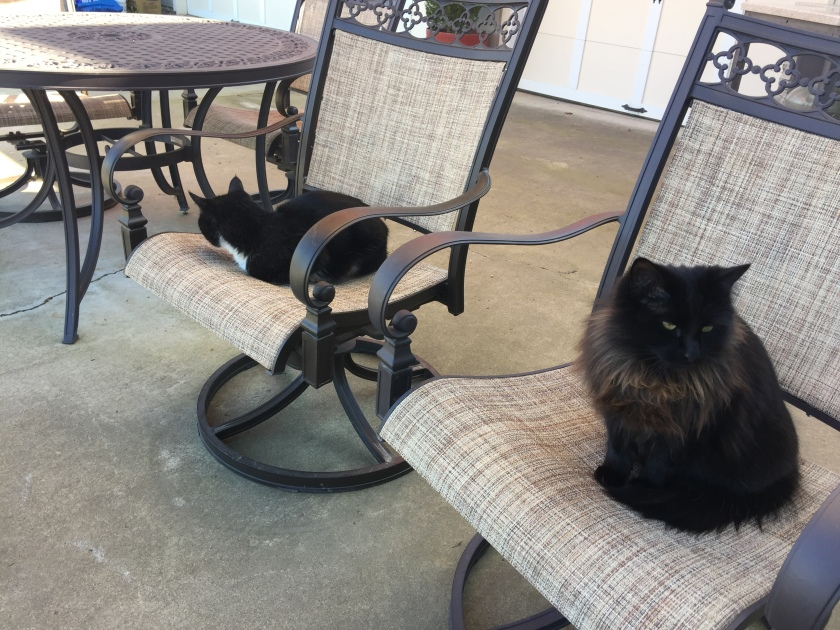 two black cats on chairs