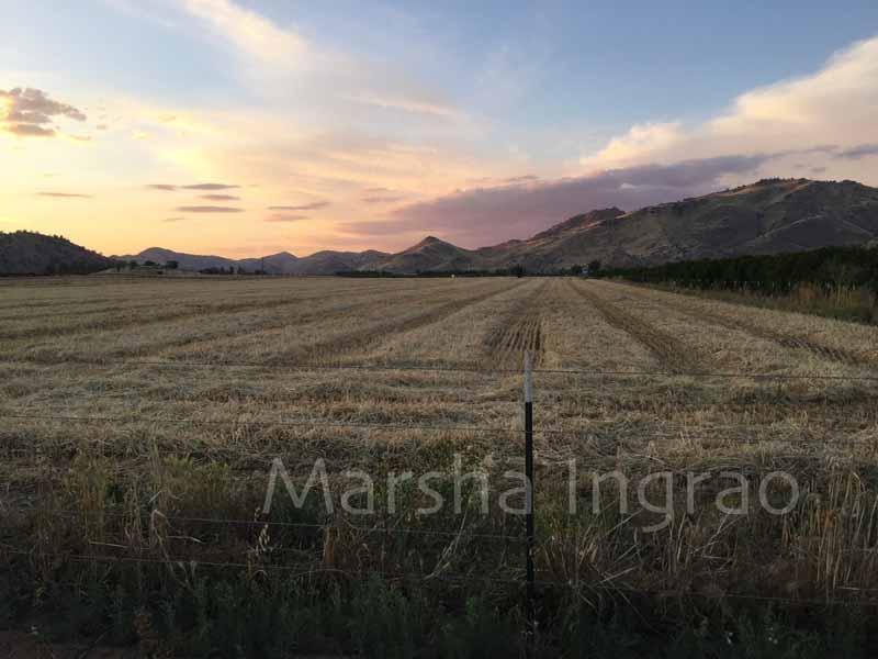 Chenille field