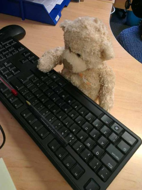 Blogging, teddy bear