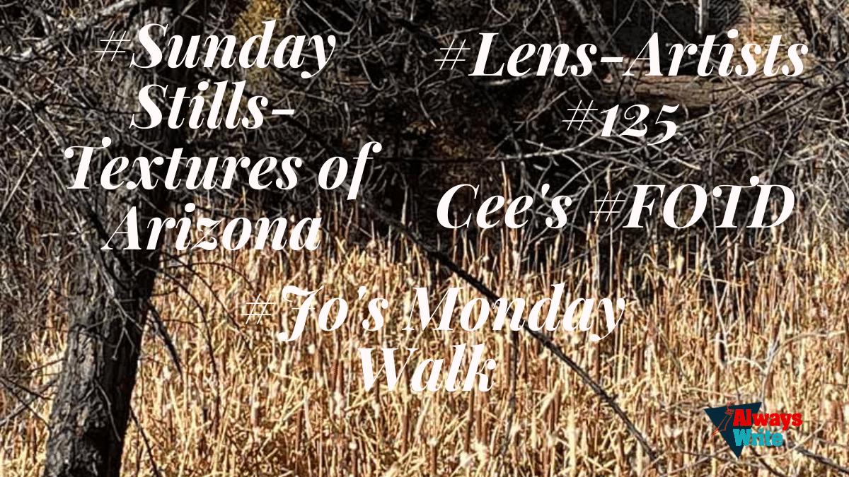 #Sunday Stills: #Textures in Prescott,Arizona