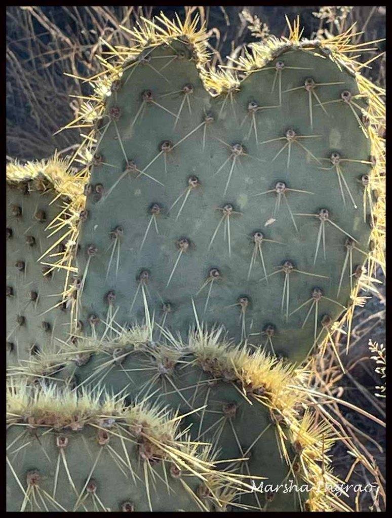 Willow Lake, Prescott, cactus