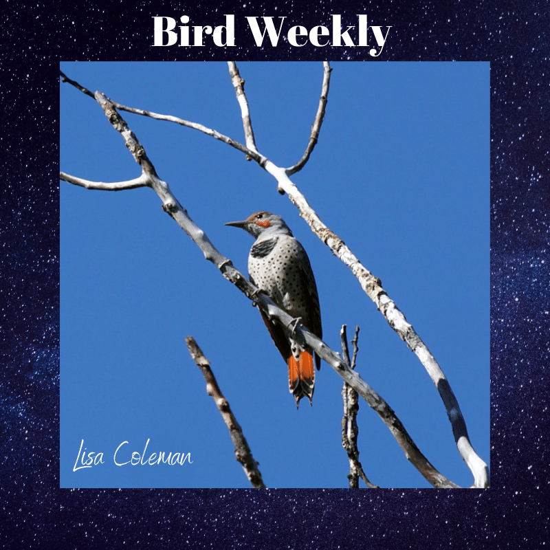 Our Eyes Open, Bird Weekly Host
