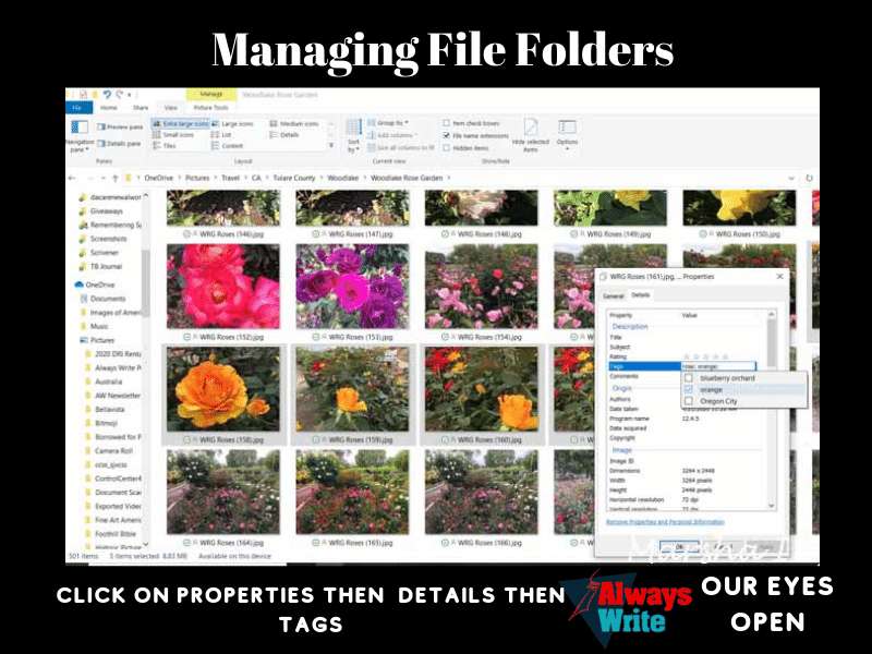 Using Folders & Tabs