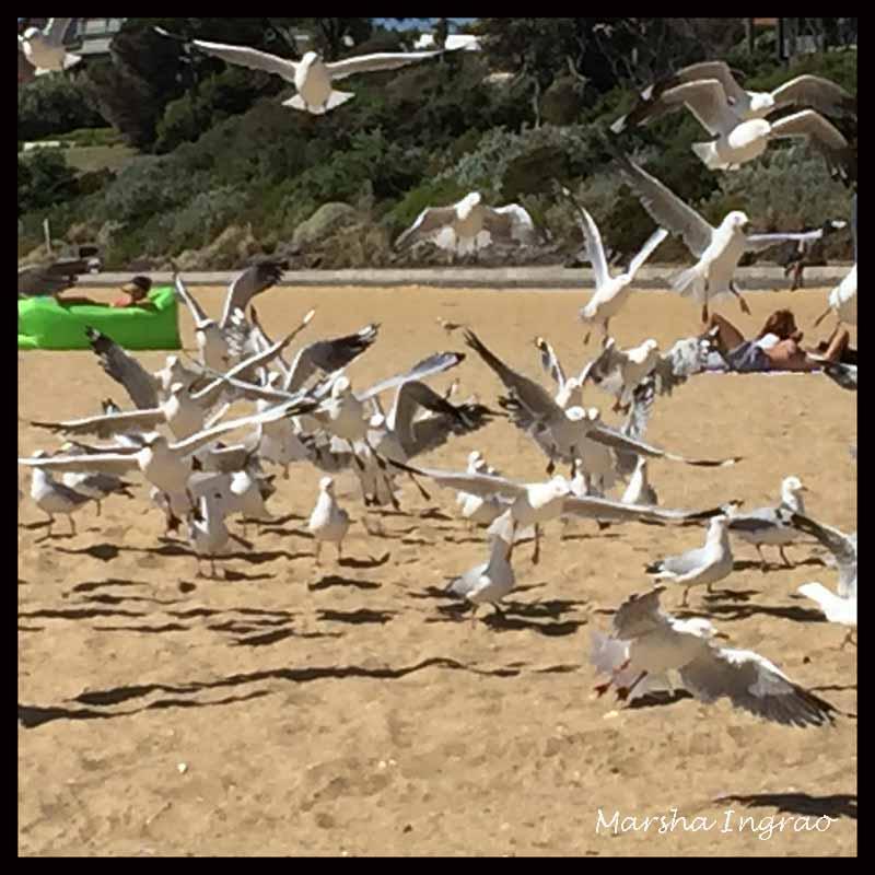 sea gulls swarming the beach