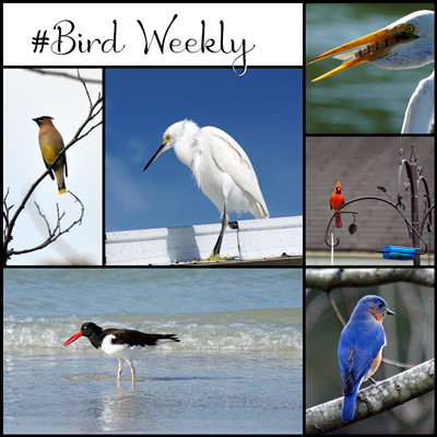 Lisa Coleman's Bird Weekly Challenge badge