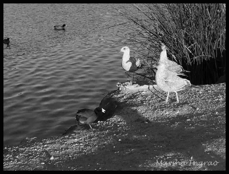 Birds on Watson Lake Peavine Trail