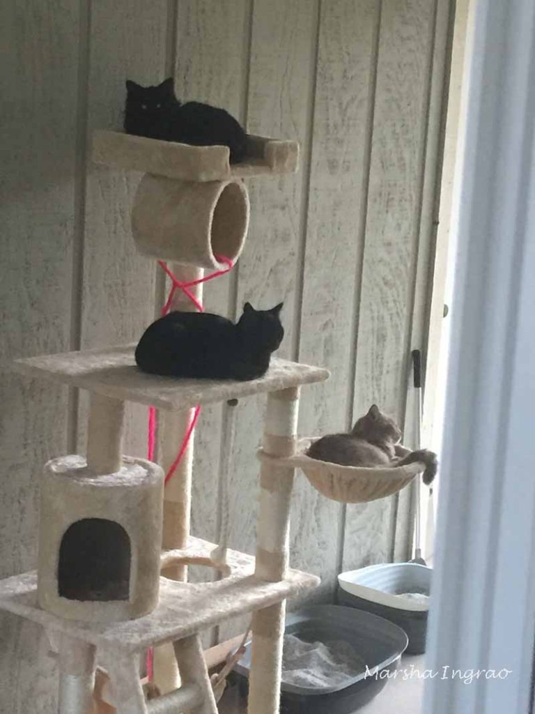 3 cats on a cat tree