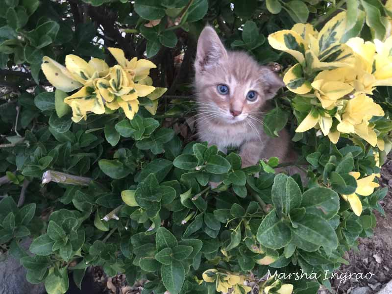 respect your cat Nutters in bushes