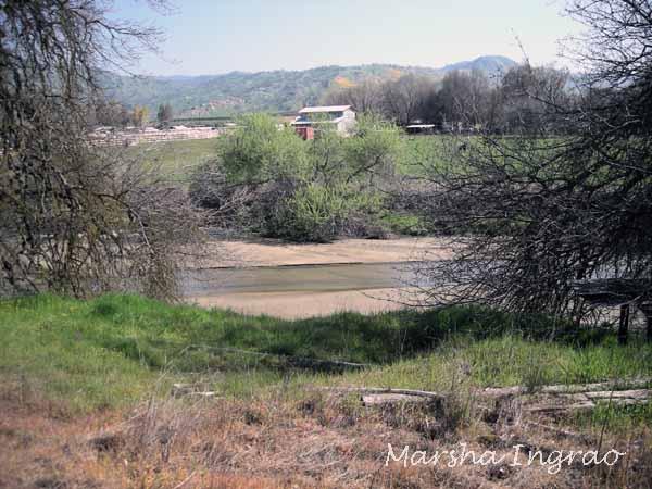 Cottonwood Creek 3/8/2008