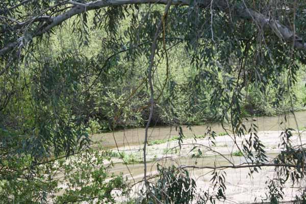 Cottonwood Creek 4/30/2012