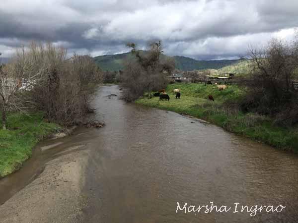 Millwood Creek 2/4/2019