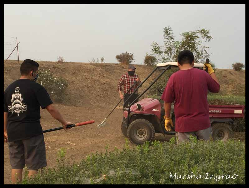 Sunday Stills Volunteering Kiwanis Rose Garden